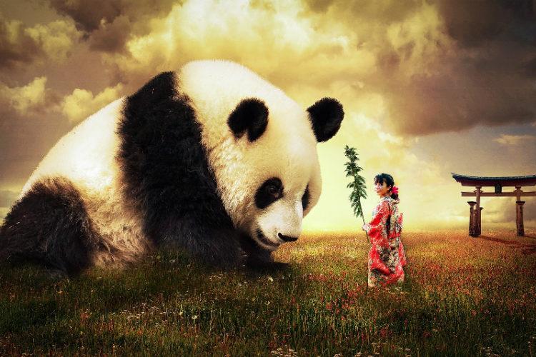 panda-asian-girl